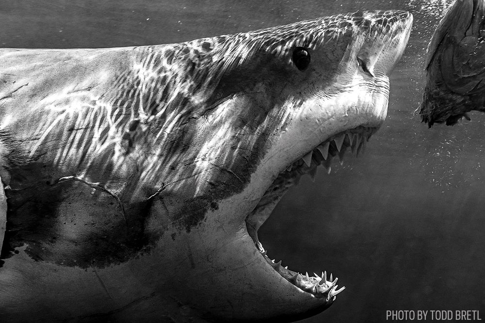 Shark black and white shark dives in the world epic photos scuba diving