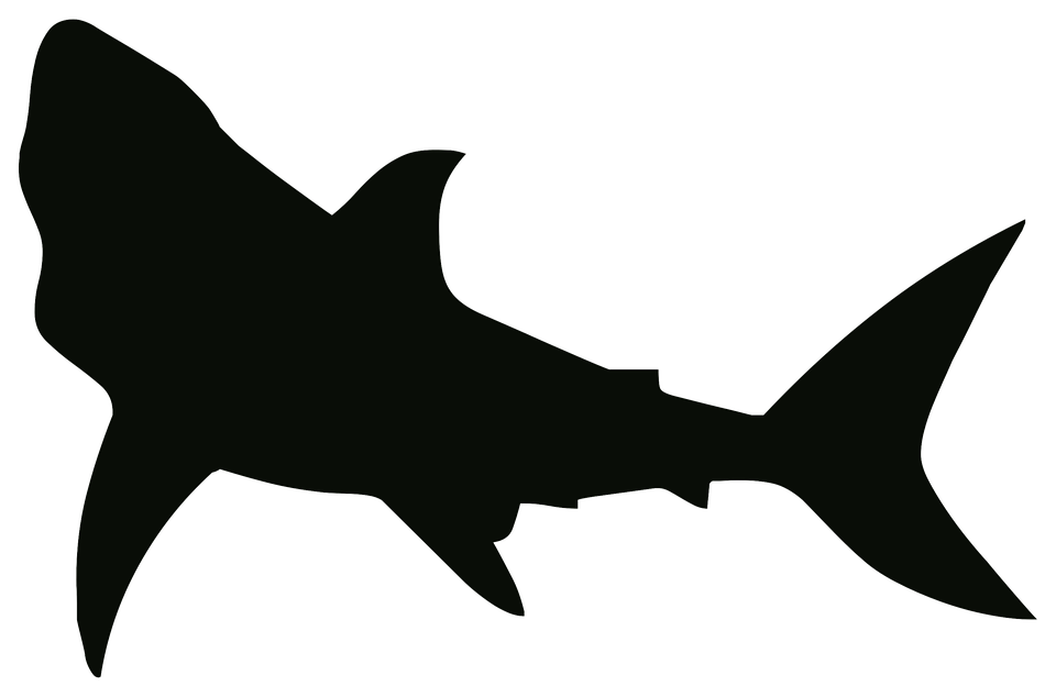 Shark black and white shark free pictures on pixabay