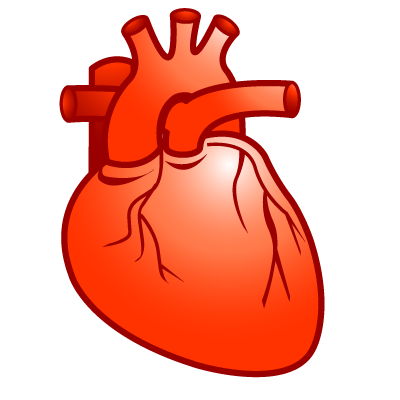Real heart heart cardiology plastic xp icon gallery clipart