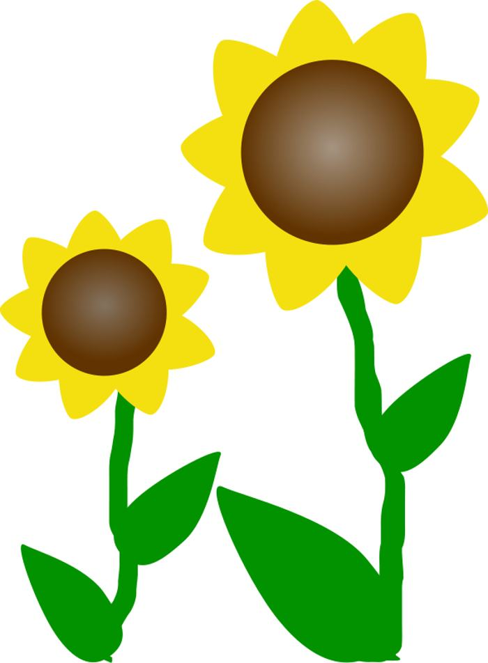 Sunflower  free free flowers images download clip art on