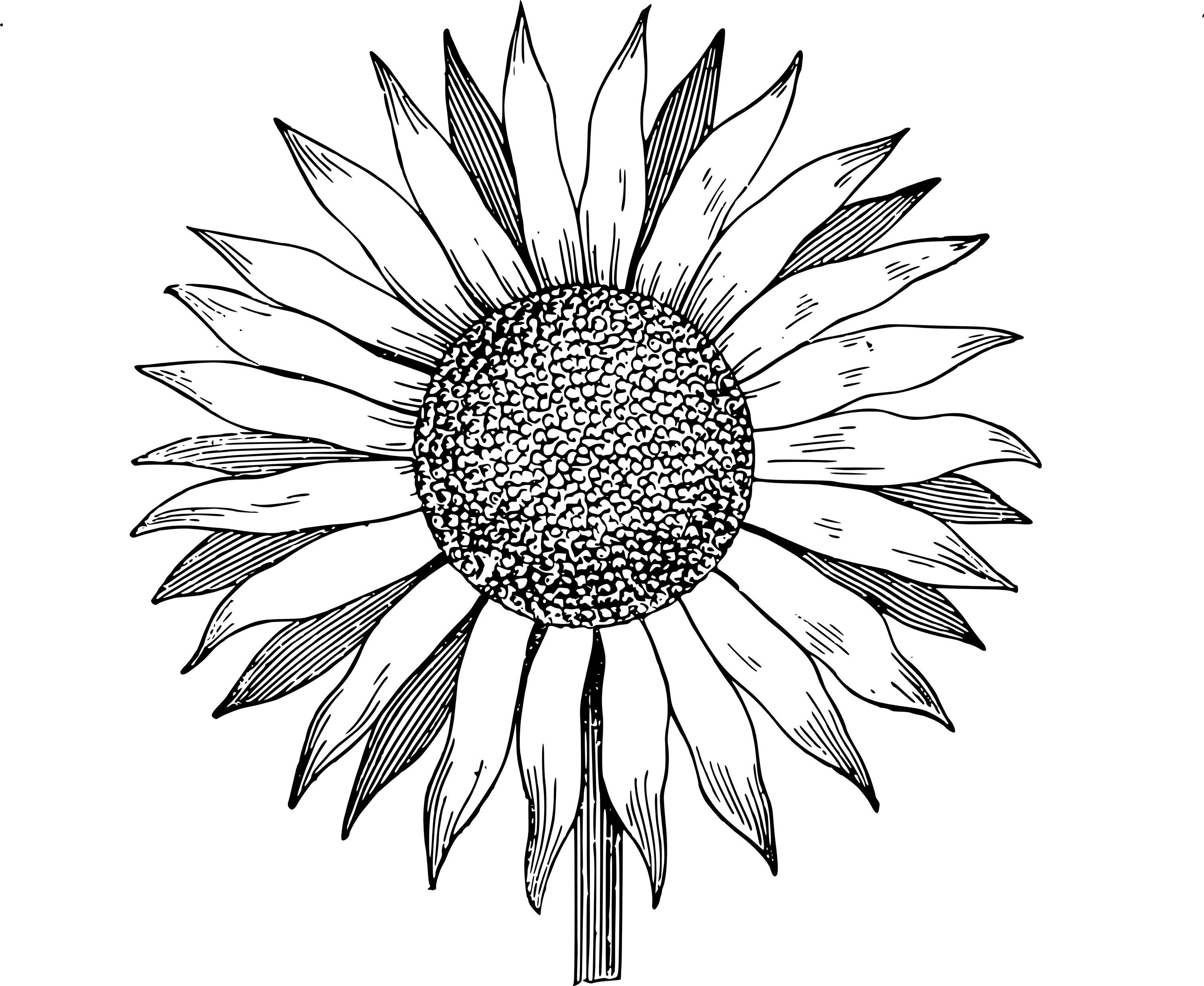 Sunflower  free free sunflowers clip art dromgal top