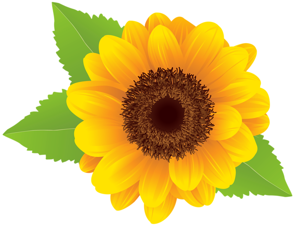 Sunflower  free sunflower clip art free printable clipart 3 2 clipartbarn