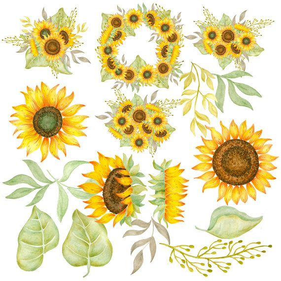 Sunflower  free sunflower clipart ideas on images