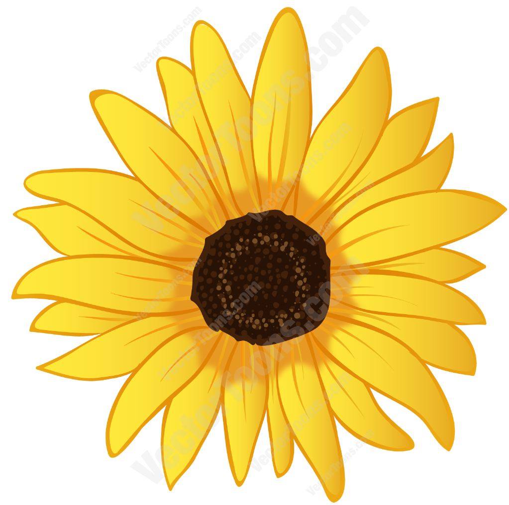 Sunflower  free sunflower graphics free download clip art on 2