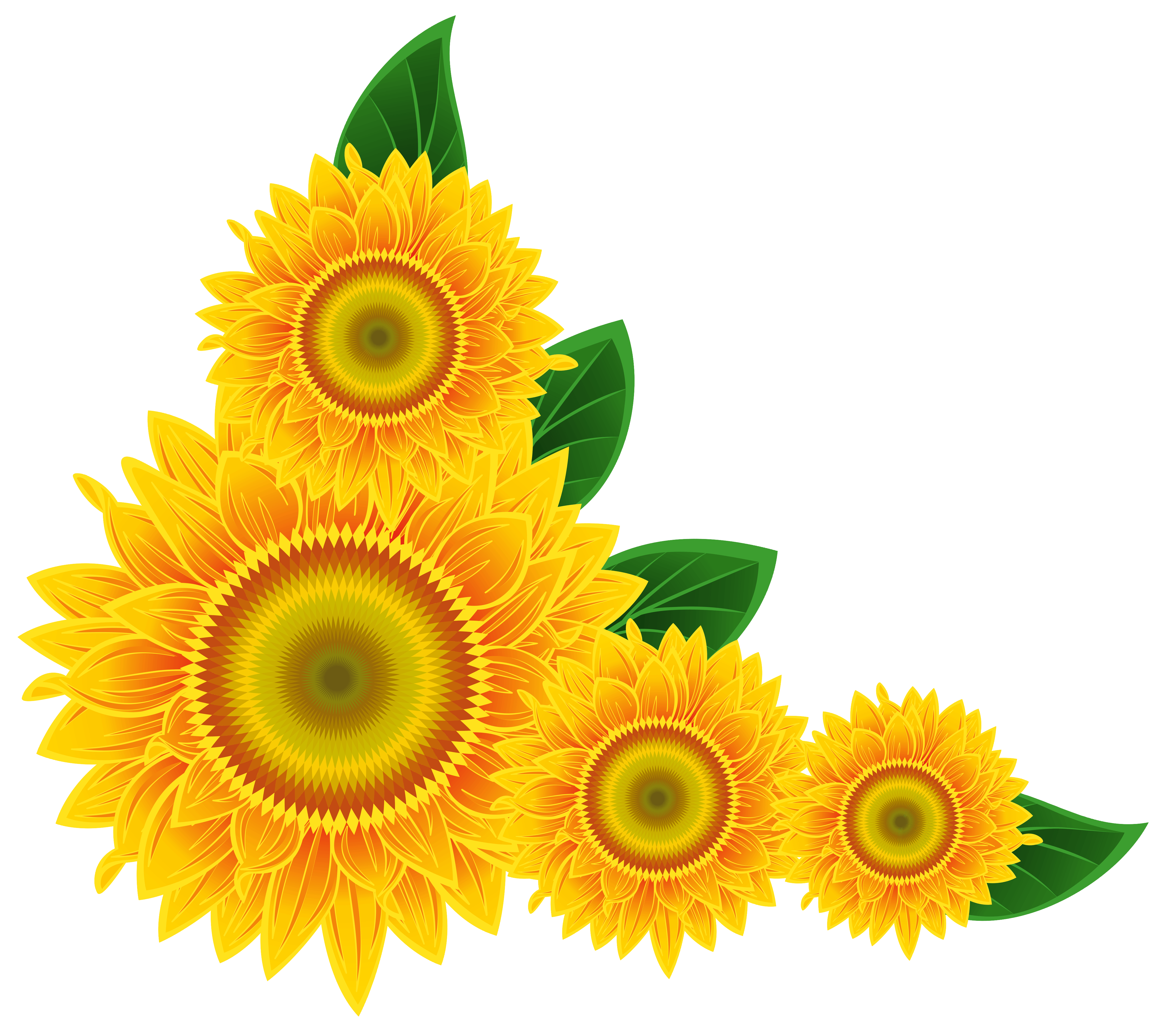 Sunflower  free sunflower school cliparts 2