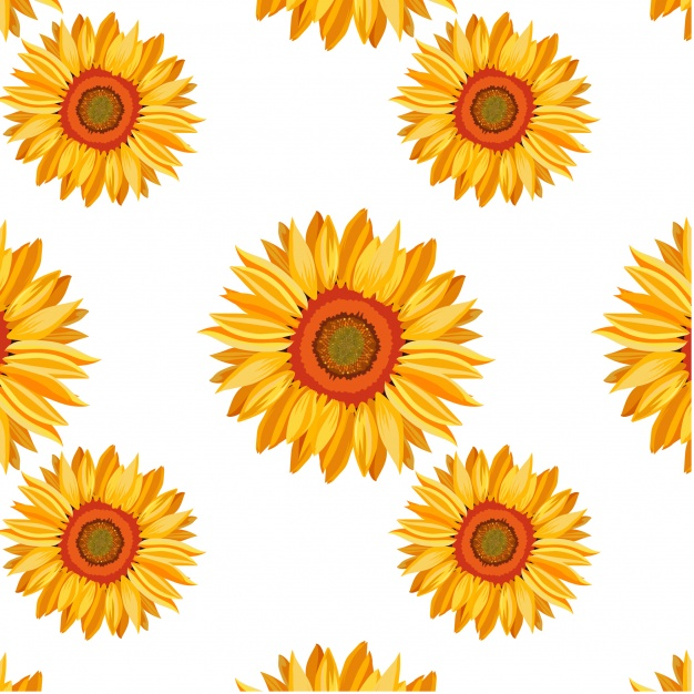 Sunflower  free sunflower vectors photos and psd files free download clip art 3