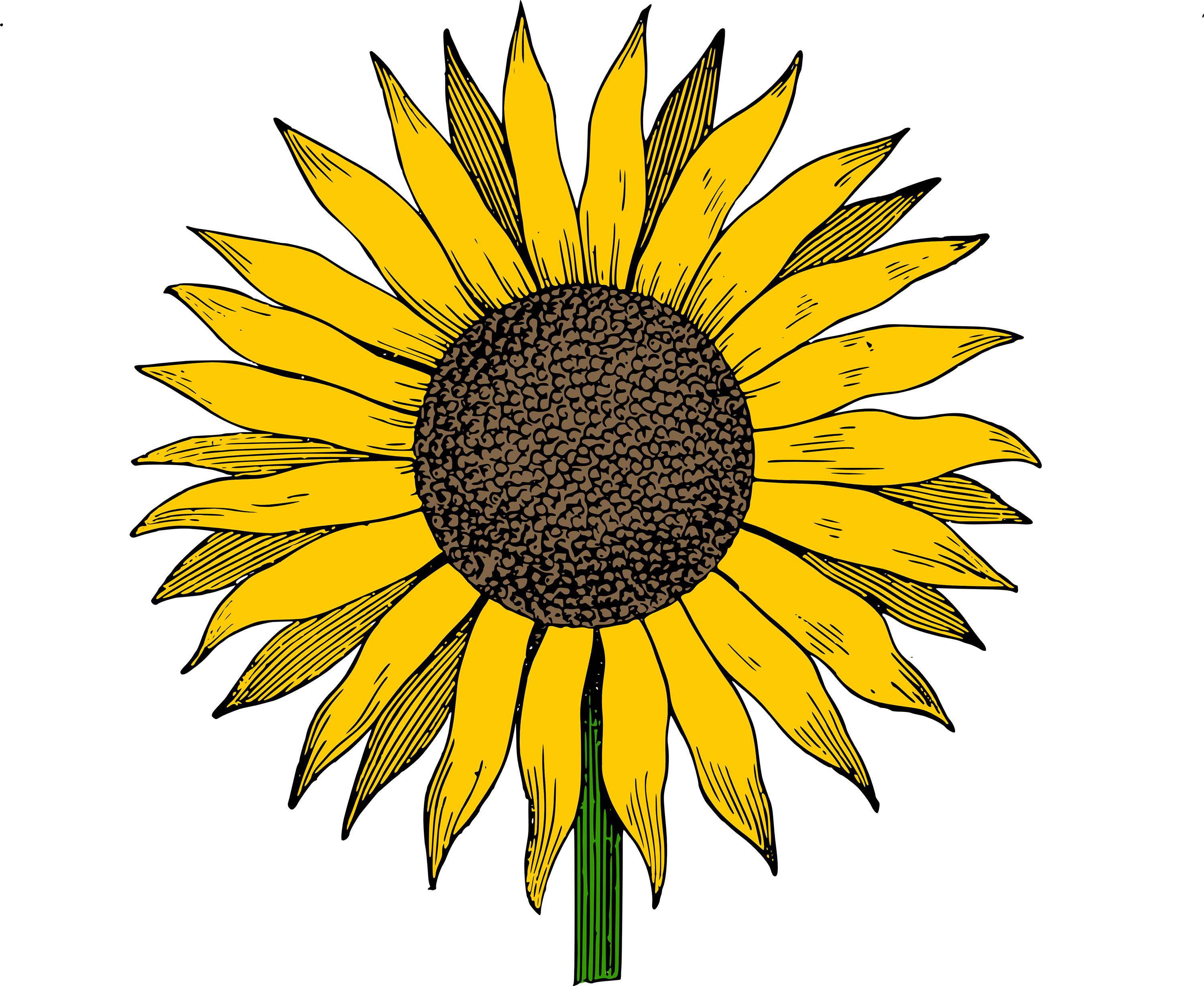 Sunflower  free sunflowers clipart free download clip art on